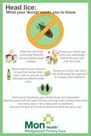 head lice what you need to know