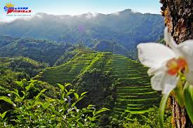 The People of Ifugao ~ Wazzup Pilipinas News and Events