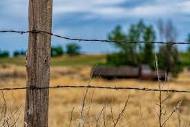 The Best Fence For Cattle Ebook Pdf Download