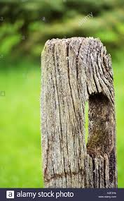 An Old Wooden Fence Post Against A Bright Green Grass And Pine Tree Stock Photo Alamy