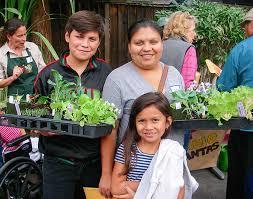 urban gardens improve food security