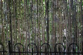 Bamboo Light Dirt Simple Part 20