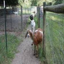 Goat Fencing 101 Homesteading And Livestock Mother Earth News