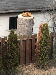 Sara Ryan on Twitter in 2020 | Tree stump, Backyard, Tree