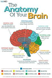 Pin by Ada Greene on General Knowledge Group Board   Brain facts, Brain  science, Learning science