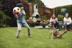 Best Electric Dog Fence To Keep You Canine Safe Bestdogfood Com