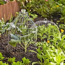 Wire Plant Cloches Better Homes Gardens