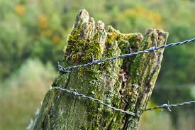 Free Images Landscape Tree Nature Forest Branch Barbed Wire Sunlight Leaf Flower Trunk Old Moss Wildlife Green Autumn Metal Agriculture Close Wood Pile Flora Twig Weathered Bridle Shrub Barrier Habitat Mood