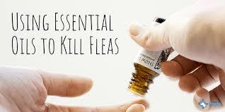 essential oils that kill repel fleas