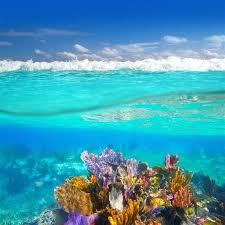 Underwater Wall Decal Vinyl Coral Reef Poster Ocean Wall Etsy