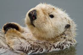 high res sea otter wallpapers 952538