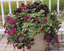 fs1215 outdoor container gardening