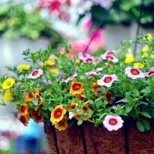 20 Best Hanging Plants Easy Plants For Hanging Baskets
