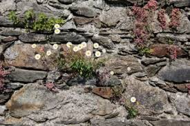 Gardening In Retaining Walls How To Make A Living Stone Wall