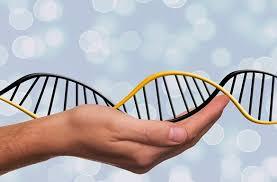 Resultado de imagem para herança genetica