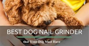 best dog nail grinder that your dog