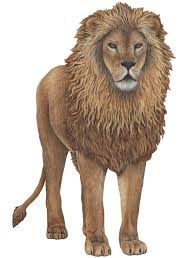 Lion Wall Decal Jungle Wall Decals Wall Decals For Kids