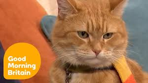 The Incredible Story of a Street Cat Named Bob | Good Morning Britain -  YouTube