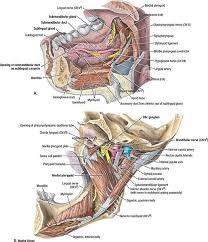 cavity radiology key