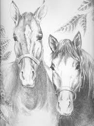 Kleurplaten Voor Volwassenen Paarden