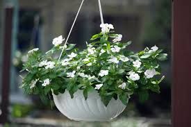 flower hanging basket stock image