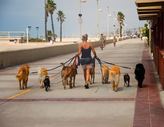 Image result for Take The Walk Dogs Job