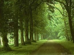 Resultado de imagem para grandes caminhos da natureza