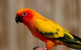صور انواع الطيور خلفيات ورمزيات طيور ملونة ميكساتك