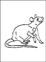 Leuke Kleurplaat Rat Gratis Kleurplaten