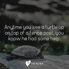 Littlemissreiki On Twitter Anytime You See A Turtle Up On Top Of A Fence Post You Know He Had Some Help Daily Reiki Nature Quotes Precepts Affirmation Littlemissreiki Withlove Justfortoday Today Now