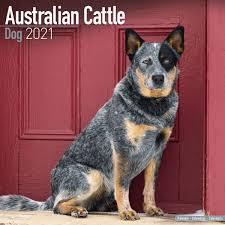 Blue Heeler Car Window Sticker V01 Australian Cattle Dog Board Decal Sign Dogs Collectibles