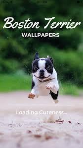 boston terrier wallpapers pro 1 0 free