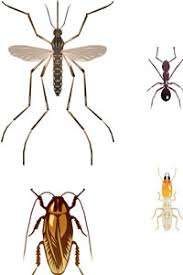 Download Termite Ant Difference  Background