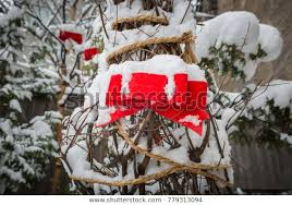 Red Ribbon Tied Tree Time Snow Stock Photo Edit Now 779313094
