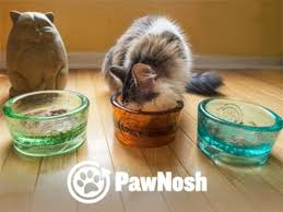 giveaway osh glass pet bowl the