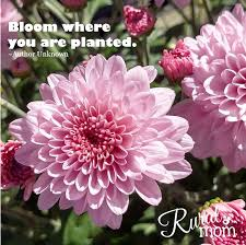 gardening quotes and gorgeous blooms to inspire your spring