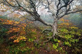 craggy gardens landscape photography