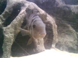 3d fish aquarium background
