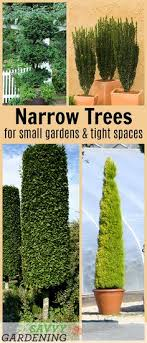 30 best small garden trees images