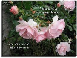 a rose can live among the thorns inspirational poem