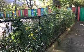 How Paint Can Help Unsightly Fences Blend Into Your Landscape