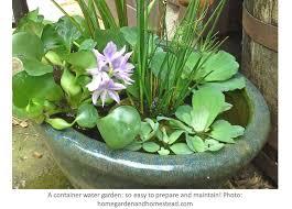 a container water garden sooo easy