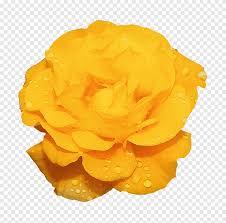 Rose Flower Yellow الرسوم المتحركة جميلة الزهور مجردة الإبداعية