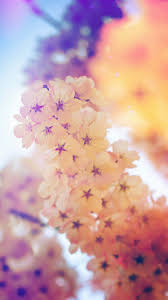 صور خلفيات جميلة اجمل صور خلفيات دلع ورد