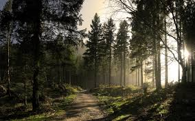 forest wallpaper hd free