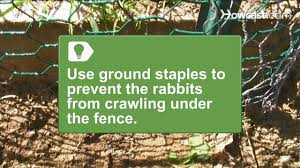 How To Install A Rabbit Proof Fence Youtube