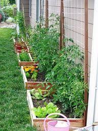 Our Suburban Garden Backyard Vegetable Gardens Small Vegetable Gardens Vegetable Garden Design