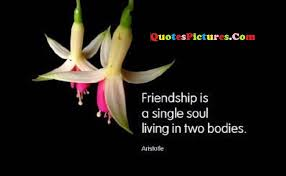nature quote friendship is a single soul living in two bodies