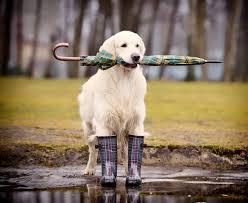 """Résultat de recherche d'images pour """"chien mouillé"""""""