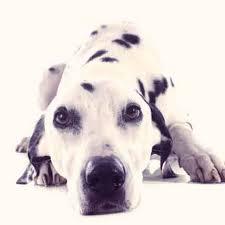 8 dogs that don t bark petcarerx